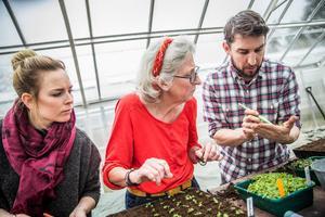 Daniel Björklund Jonsson, verksamhetsledare på Skillebyholm, har haft många kurser inom odling. I april 2016 visade han hur man förkultiverar växter och blommor, i detta fall lejongap, för Sandra Wigfors från Rönninge och Britt-Marie Olheim från Pershagen samt LT:s alla läsare.Arkivfoto: Edis Potori