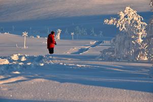 Ledkryssen blir allt lägre i den djupa snön.