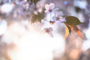De blommande träden piggar upp med sina vackra färger.