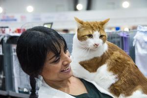 Vi som har huskatter visar gärna upp dem för att inspirera fler att ställa ut sina katter förklarar Sarah Forslund, Gävle.