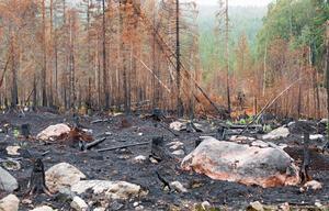 Av de 9500 hektar som drabbades av sommarens skogsbrand ägdes ungefär två tredjedelar av privatpersoner.