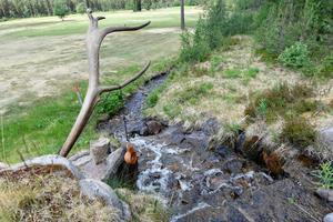 Renen finns av och till på golfbanan, så därför finns en unik regel om fri dropp om en ren trampat ner i en bunker.Det stora renhornet vid en av två bäckar med drickbart källvatten påminner om renens närvaro.