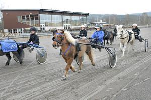 På söndag går startskottet på årets höjdpunkt för ponnytravklubben på Dannero. Vi håller