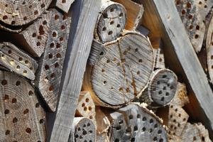 Viktor Säfve rekommenderar att alla trädgårdar har ett insektshotell. Då kommer exempelvis rovsteklar att flytta in som håller efter trädgårdens skadedjur.
