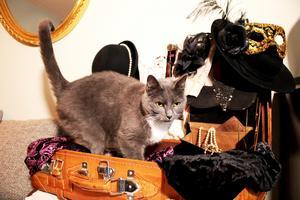 När Gunmari piffade med smycken och accessoarer i den gamla läderresväskan tog självklart katten Ella det som en signal att hon bäddade fint åt henne.