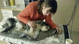Matte Ingegerd Bodevärn var med hunden Linus hos veterinären där han senare dog av skadorna efter attacken.