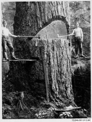 Träden hade en annan dimension än de hemma i Sverige.