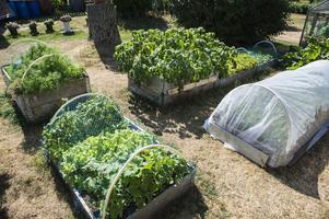 I trädgårdslandet odlar hon bland annat dill, persilja, morötter, sallad, gurka, smultron, jordgubbar och rabarber.