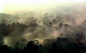 De stora bränderna i Amazonas ödelägger en skog som är viktig för alla människor. Foto: Dario Lopez-Mills