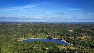 Skogsstyrelsen vill förstärka skogen som en tillväxtmotor.