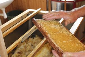 Skattning. Blomnektarn omvandlas till honung i kupan och skördas av biodlaren.