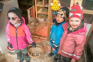 Ägg! Kristina Petrovic, Ishak Celiker och Minna Samrell berättar att avdelningarna turas om att kolla efter ägg och sköta om hönorna.