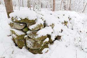 I lövskogens naturreservat finns den här gamla stenmuren.