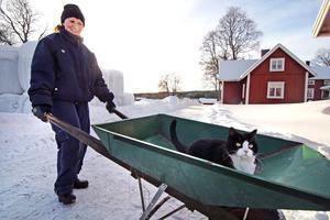 Förutom hästar och ungdjur har Pia och Thomas också katten Sigge som älksar att åka skottkärra.