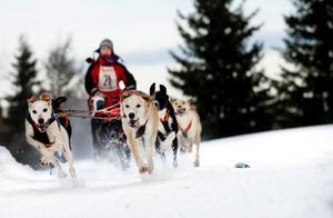 Här är det Åsa Fjällström tävlande för Gafsele, i Lappland, som drar iväg. Åsa var framgångsrik vid förra årets SM med en silvermedalj i 8 spann.