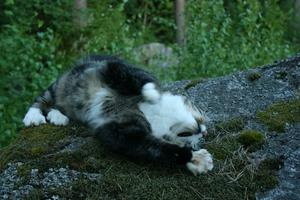 Simon ligger på en sten och sträcker ut efter en underbar dag i solen.