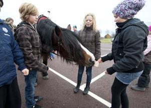 Hanna Deras bjuder en av de deltagande hästarna på knäckebröd. Det uppskattades.