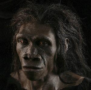 Homo erectus var vår egen arts anmoder. På bilden en rekonstruktion av en kvinnlig individ.   Foto: John Gurche/TT
