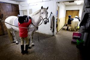 Under höstlovet kommer barn och unga att få prova på olika stall- och hästrelaterade aktiviteter.