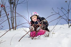 Förutom skidåkning både nerför och på längden, pulkaåkning och fika kan man även ägna en söndag i Hemlingby åt att klättra i snödrivor. Det vet fyraåriga Saga-Maria Loikkanden Sundell.