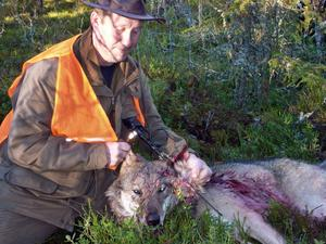 Älgjakten fick en oväntad start då Jimmy Larsson sköt ihjäl en varg i nödvärn.