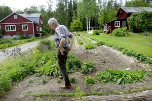 Stora grönsaksland ryms också i trädgården. I bakgrunden syns jordgubbarna, obesprutade och gödslade med gräsklipp.