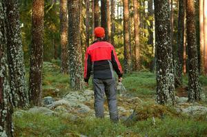 Bilden är tagen 2011 i det nya naturreservatet i Skärklacken, Dala-Floda, Gagnefs kommun. I grannkommunen Borlänge har kommuninvånarna närmast till skyddad natur. Invånarna i Malung-Sälens kommun har längst till skyddad natur.