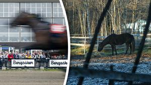 Vissa av hästarna har tidigare tävlat på Bergsåker. Hästarna på bilden har inget med innehållet i artikeln att göra.