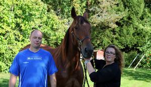 Paret Frölander har haft hästar som tjänat över en miljon tidigare, bland annat numera avlidne Lord Rocket (på bilden). Bild: Tomas Frånlund