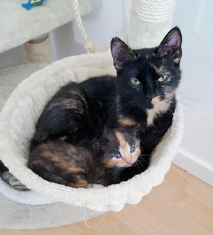 Kattmamman Ixie med sin kattunge  Minas.