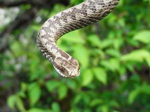 fredag 21/5. hittade en huggorm som jag hade i handen för att få en skarpbild på ormen och inte bakgrunden.