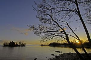 Träd som avspeglar sig mot solnedgången i Stockholms Skärgård.