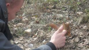 Denna söta ekorre träffade jag på i skogen när jag skulle gå hem från affären. Den sprang runt på min sko. Satte mig ner och då började den klättra på mig. Det är inte varje dag man har en ekorre springandes på sig. Min kille kom för att kolla på ekorren då passade ja på att ta denna söta bild på dom.Fick även chansen att hålla i min första ekorre :)Riktigt mjuk och len.