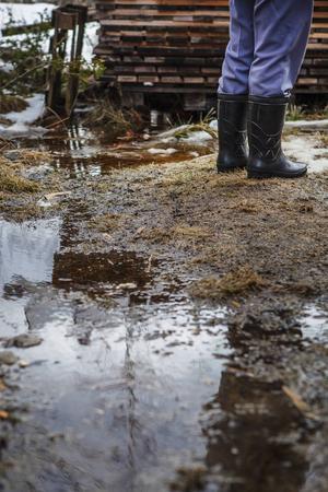Mellan vedboden och villan är vattnet decimeterhögt. Sedan skogen försvann börjar tomten likna en myr.