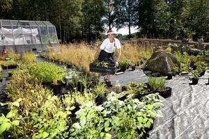 Grundläggande. Trädgårdsdesignern Lena Falk har hundratals perenner i sin egen trädgård. Hon driver också upp växter till försäljning. Foto: Per G Norén
