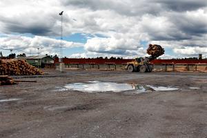 På Hissmofors sågverk är det mycket att göra. Under våren har det varit ungefär dubbelt så hög inkörningstakt av timmer som vanligt.