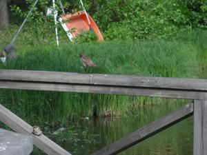 Gick Å-promenaden på Nationaldagen, och följde några fåglar.