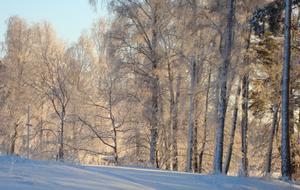 Vid en utflykt till Björnö tog jag denna bild: Solen lyser på träden och får dem att skimra vackert i rött.