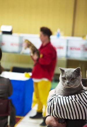 För katterna som ställdes ut i helgen blev det en nervös väntan inför bedömningen.