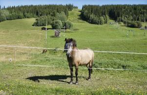 Två hästar är det enda liv som finns i Almåsabackarna den här tiden på året. Men till vintern kommer det förhoppningsvis att sjuda av åkare i nedfarterna.