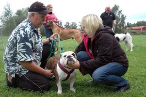 Annette Nilsson som agerar domare känner på Kalle Frisks engelska bulldog Hilda. Flera av övningarna går ut på att hundarna ska låta sig hanteras.