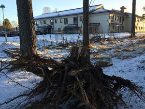 Enligt uppgifter ska en byggnad i Kvarnsveden ha träffats av ett fallande träd.