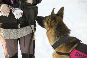 Siw Strandbergs schäfer Essie uppmuntras med godis när hon har hittat den gömda leksaken.