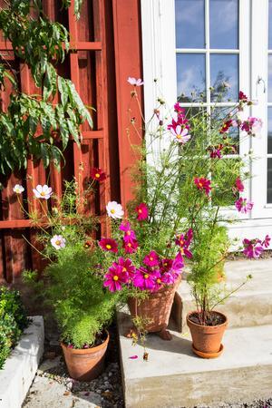 Många växter finns i krukor och urnor.