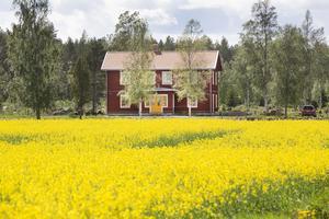 Den ockragula dörren syns på lång håll. Huset är nybyggt men i gammal stil.