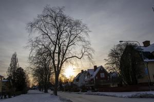 Almallén på Västra Ringvägen  i Villastan.