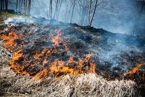 Torrt fjolårsgräs brinner väldigt lätt.Bild: Linda Eliasson