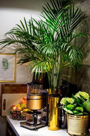 En grönskande hörna på bänkskivan ger liv och energi till köket.