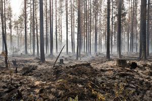 Elden har svept förbi vid Öjesjön i Sala augusti 2014. Röken från branden förmörkade himlen långt upp i Dalarna.