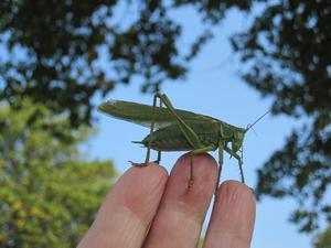 Plötsligt landade den på mitt finger! Vi pratade en stund. Sen flög den igen.